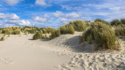 Wall Mural - Coastal landscape with sand dunes