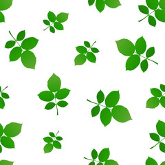 Green poplar sprig with leaves background. Vector illustration.