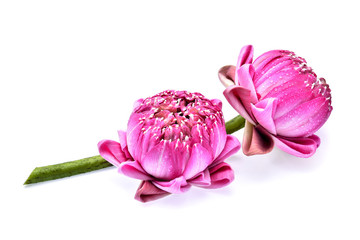 lotus flower with water drops isolated on white background