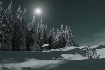 amazing night winter view, spruce forest in moonlight, spectacular mountains scenery, cold frosty weather, awesome nature image, Carpathians, Ukraine, Europe