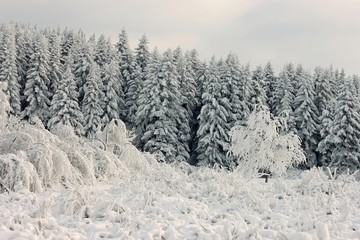 fairy mountains image, winter forest covered frost hoar at cloudy frosty day, amazing nature scenery, Carpathian mountains, Ukraine, Europe landscape
