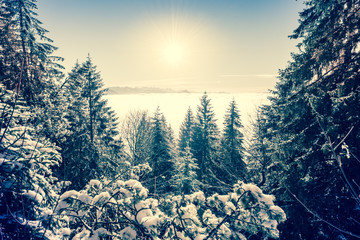 Joyful winter day in the snowy forest before the Christmas holiday. Switzerland. Rigi