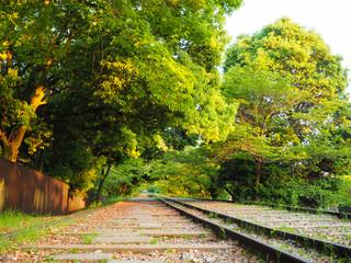 新緑と線路