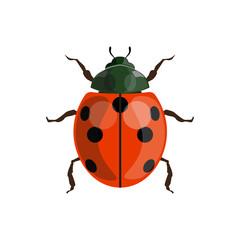 Ladybug (ladybird) vector