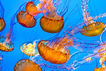 Fototapete - jelly fish in the ocean