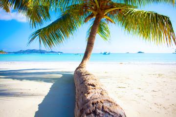 Seychelles beach with palm