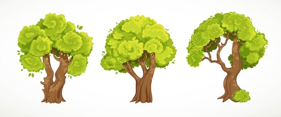 Wall Murals Kids Set of old thick trees with summer or spring green foliage vector drawing isolated on white background