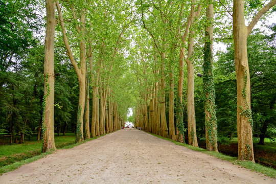 walking to chenonceau