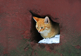 A homeless cat looks out of the hole of the house leading to the basement.