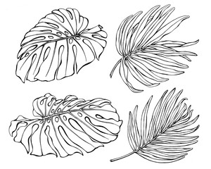 Set of exotic tropical monstera and palm leaves. Black and white outline illustration hand drawn work isolated on white background.
