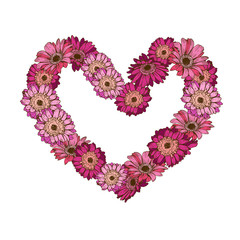 Heart of daisy flowers isolated on white background. Romantic flower collection. Vector Illustration for Happy Valentines Day Design.