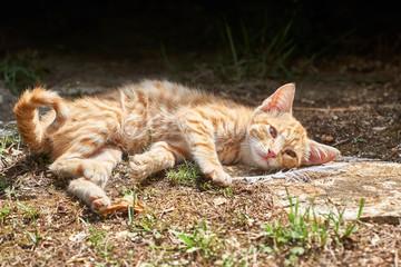 junge Katze liegt am Wegesrand und ruht sich aus