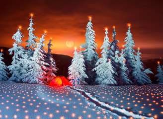 Illuminated winter forest in the Carpathians