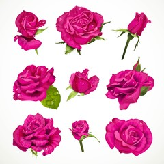 Pink roses set isolated on a white background