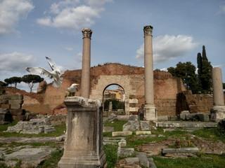 Möwen im Forum romanum