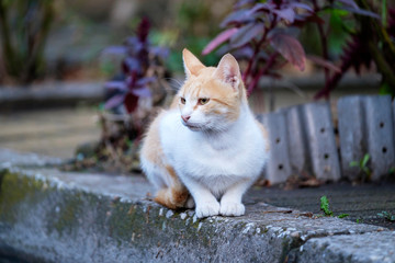 Portrait of a white-red cat on the sidewalk 1