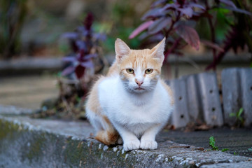 Portrait of a white-red cat on the sidewalk 4