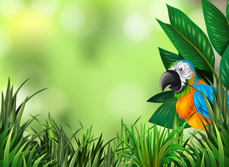 Parrot on the green nature background