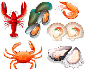 Set of seafood on white background