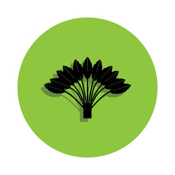 Ravenala tree in green badge icon