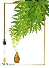 Marijuana plant and cannabis oil bottles vector.