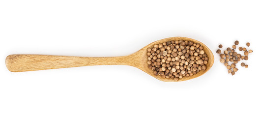 Fototapeta coriander seed in wooden spoon isolated on white background. Top view. Flat lay obraz