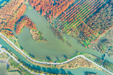 Colorful autumn forest in wetland park,aerial view