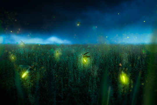 firegly on a grass field at night