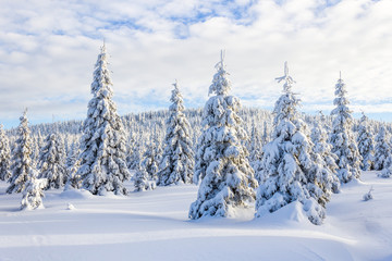 Calm view of the snowy landscape with snowy white trees and forest in the background and smooth cloudy sky in Krkonose (Giant Mountains)