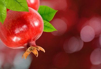 Fototapete - image of a pomegranate on a branch close up