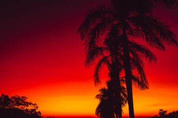 Colorful warm bright sunset or sunrise with palms in tropics
