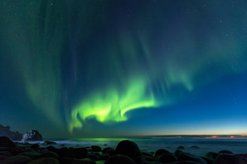 Aurora Borealis, northern lights at Utakleiv beach in summer night, Lofoten islands, Norway