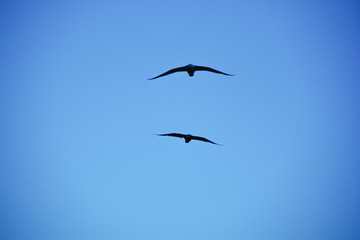 Silhouettes of birds in the blue sky