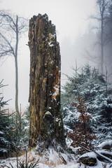 toter Baumstamm im Winter