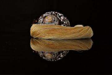 Mirror image of sea shell