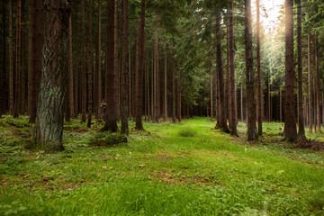 Forest Westerwald