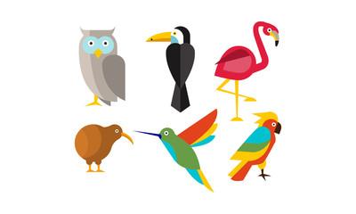 Birds set, owl, flamingo, parrot, hummingbird, toucan, kiwi vector Illustration
