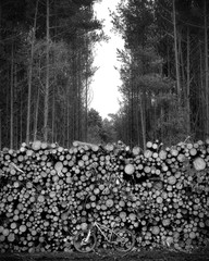 Mountain bike and logs in a wintry forest, black and white