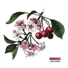 Hand drawn cherry branch