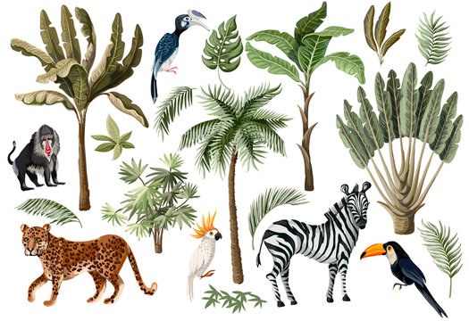Tropical tree elements such as palm, banana and jungle animals isolated. Vector.