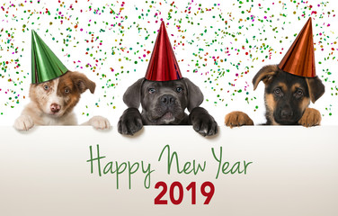Happy new year puppies 2019