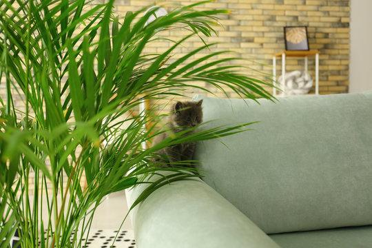 Cute little kitten near Areca palm at home