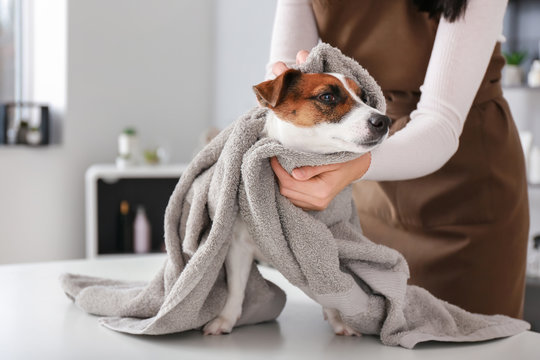 Female groomer wiping dog after washing in salon