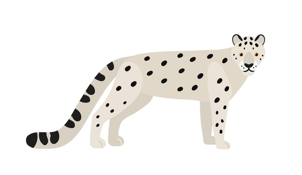 Snow leopard or ounce isolated on white background