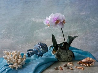 Still life with orchid flower on the sea beach
