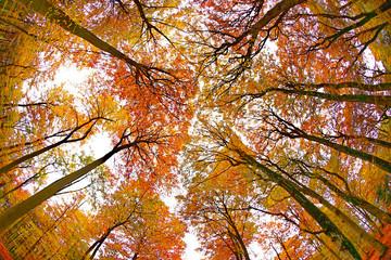 Autumnal forest near Kastel-Staadt, Rhineland-Palatinate, Germany
