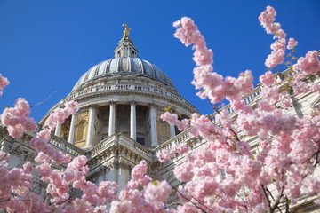 St. Paul's Cathedral and spring blossom, London, England, United Kingdom, Europe