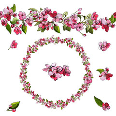 Hand drawn colored  sketch  of pink malus flowers  on white background. Floral composition of blossoming brunch of apple tree. Endless brush, wreath.