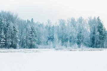 Beautiful fabulous snowy winter coniferous forest