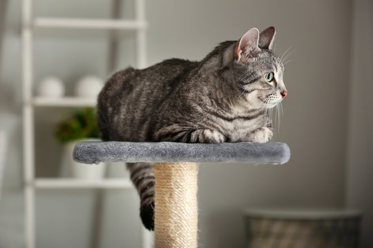 Cute cat on scratching post at home